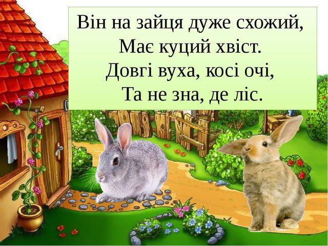 Він на зайця дуже схожий, Має куций хвіст. Довгі вуха, косі очі, Та не зна...