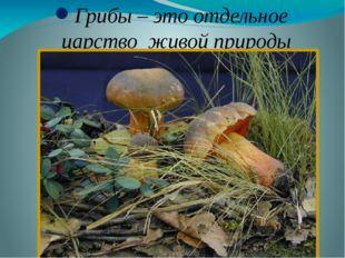 Грибы – это отдельное царство живой природы