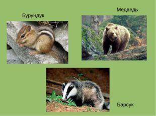 Бурундук Барсук Медведь