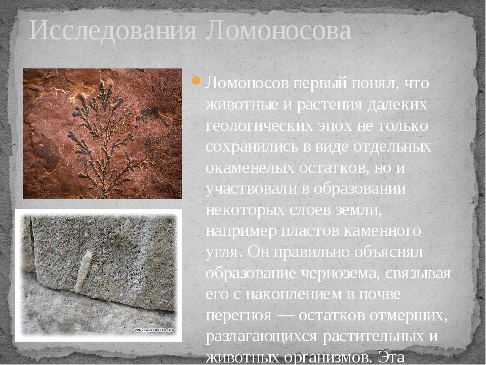 Исследования Ломоносова Ломоносов первый понял, что животные и растения далек...