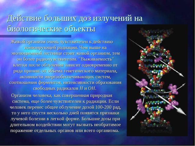 Действие больших доз излучений на биологические объекты Живой организм очень...