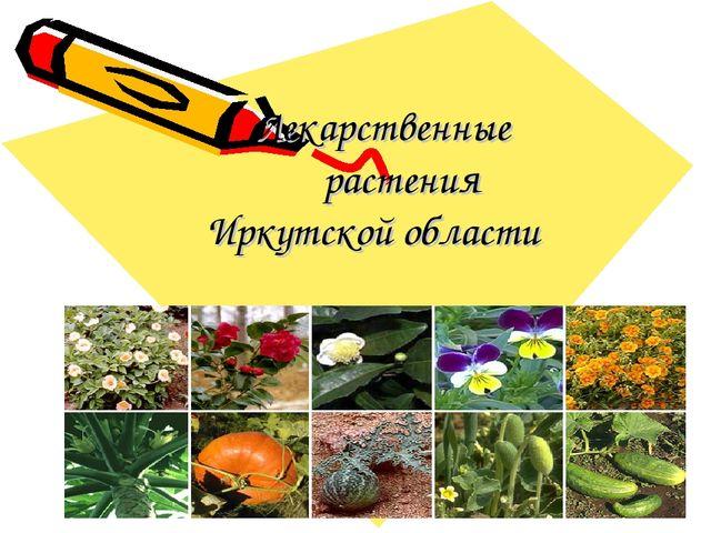 Лекарственные растения Иркутской области