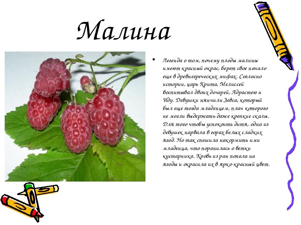 Малина Легенда о том, почему плоды малины имеют красный окрас, берет свое на...