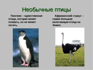 Необычные птицы Пингвин – единственная птица, которая может плавать, но не мо