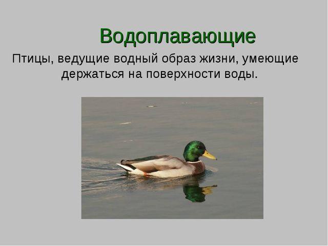Водоплавающие Птицы, ведущие водный образ жизни, умеющие держаться на поверх...
