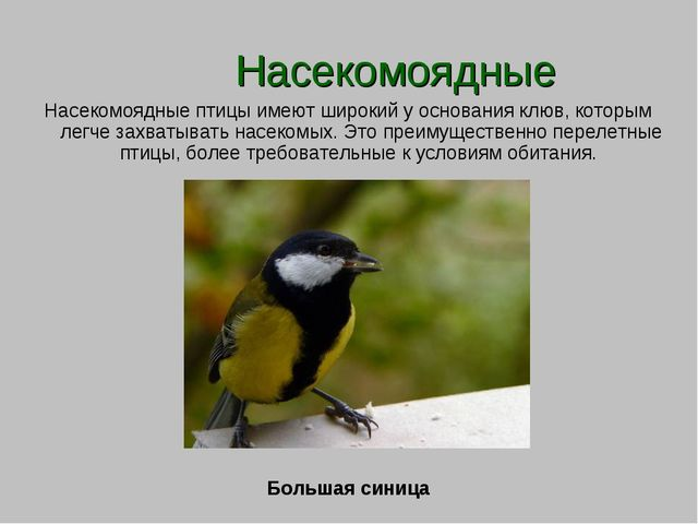 Насекомоядные Насекомоядные птицы имеют широкий у основания клюв, которым ле...