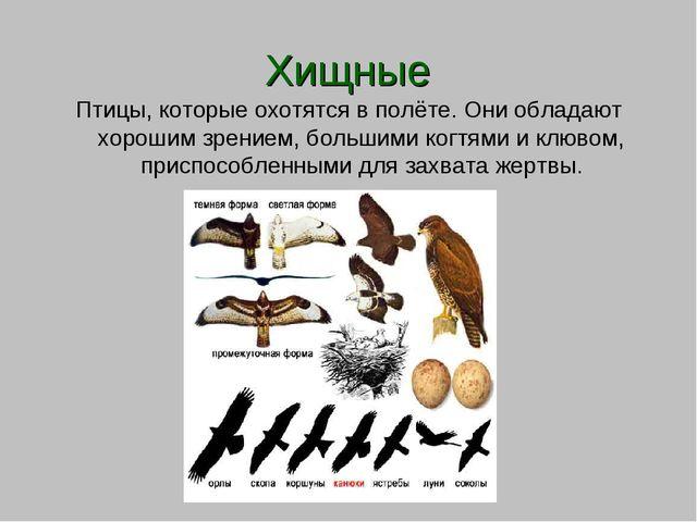 Хищные Птицы, которые охотятся в полёте. Они обладают хорошим зрением, больш...