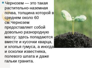 Чернозем — это такая растительно-наземная почва, толщина которой в среднем о