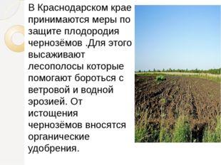 В Краснодарском крае принимаются меры по защите плодородия чернозёмов .Для э