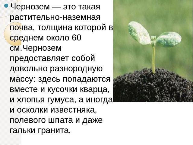 Чернозем — это такая растительно-наземная почва, толщина которой в среднем о...