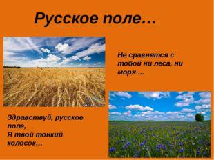 Русское поле… Не сравнятся с тобой ни леса, ни моря … Здравствуй, русское пол