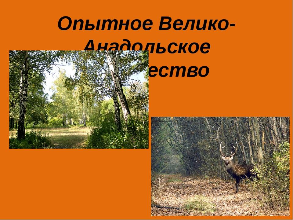 Опытное Велико-Анадольское лесничество
