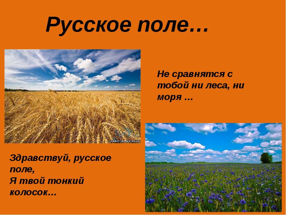 Русское поле… Не сравнятся с тобой ни леса, ни моря … Здравствуй, русское пол...