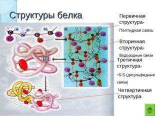 Структуры белка Первичная структура- Пептидная связь Вторичная структура- Вод