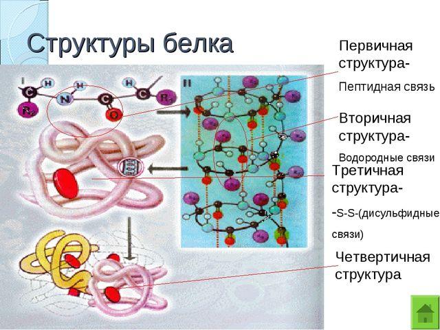 Структуры белка Первичная структура- Пептидная связь Вторичная структура- Вод...