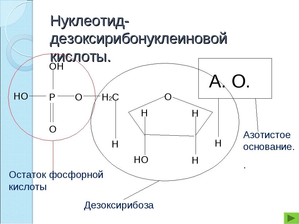 Нуклеотид- дезоксирибонуклеиновой кислоты.