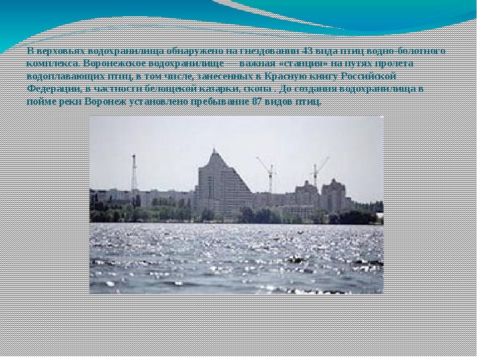 В верховьях водохранилища обнаружено на гнездовании 43 вида птиц водно-болотн...