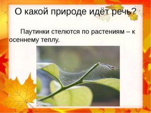 О какой природе идёт речь? Паутинки стелются по растениям – к осеннему теплу.