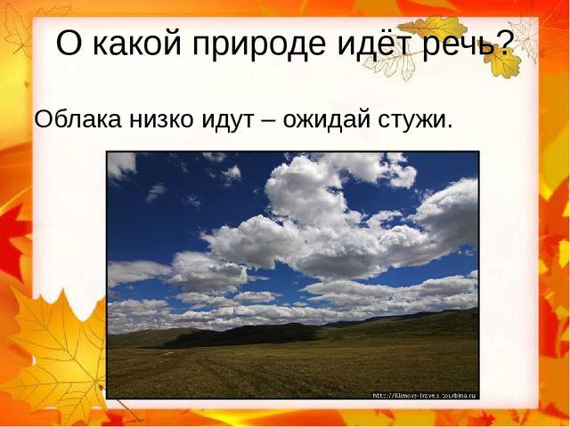 О какой природе идёт речь? Облака низко идут – ожидай стужи.