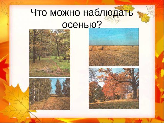 Что можно наблюдать осенью?