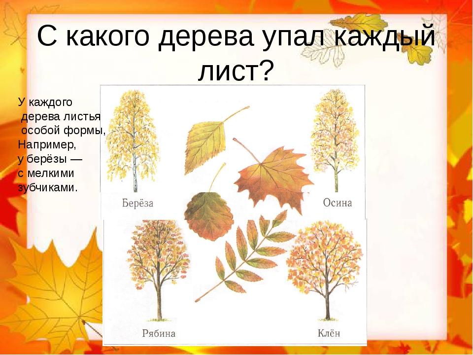 С какого дерева упал каждый лист? У каждого дерева листья особой формы, Напри...