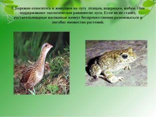 7. Бережно относитесь к живущим на лугу птицам, ящерицам, жабам. Они поддержи
