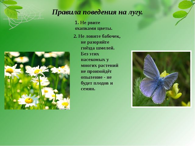Правила поведения на лугу. 2. Не ловите бабочек, не разоряйте гнёзда шмелей....