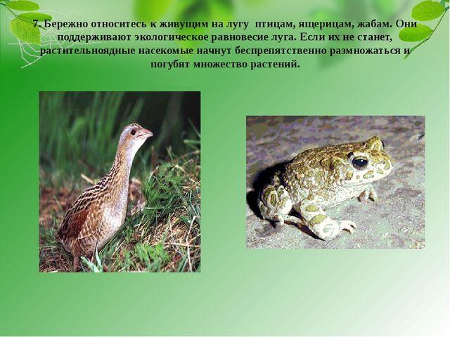 7. Бережно относитесь к живущим на лугу птицам, ящерицам, жабам. Они поддержи...