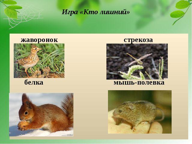 Игра «Кто лишний» жаворонок стрекоза белка мышь-полевка