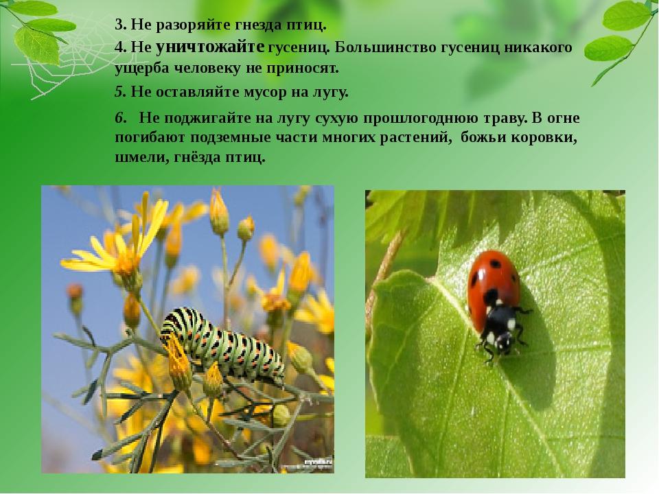 4. Не уничтожайте гусениц. Большинство гусениц никакого ущерба человеку не п...