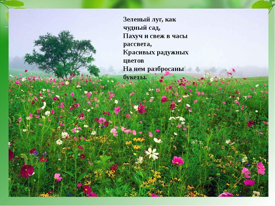 Зеленый луг, как чудный сад, Пахуч и свеж в часы рассвета, Красивых радужных...