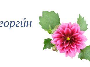 георгúн