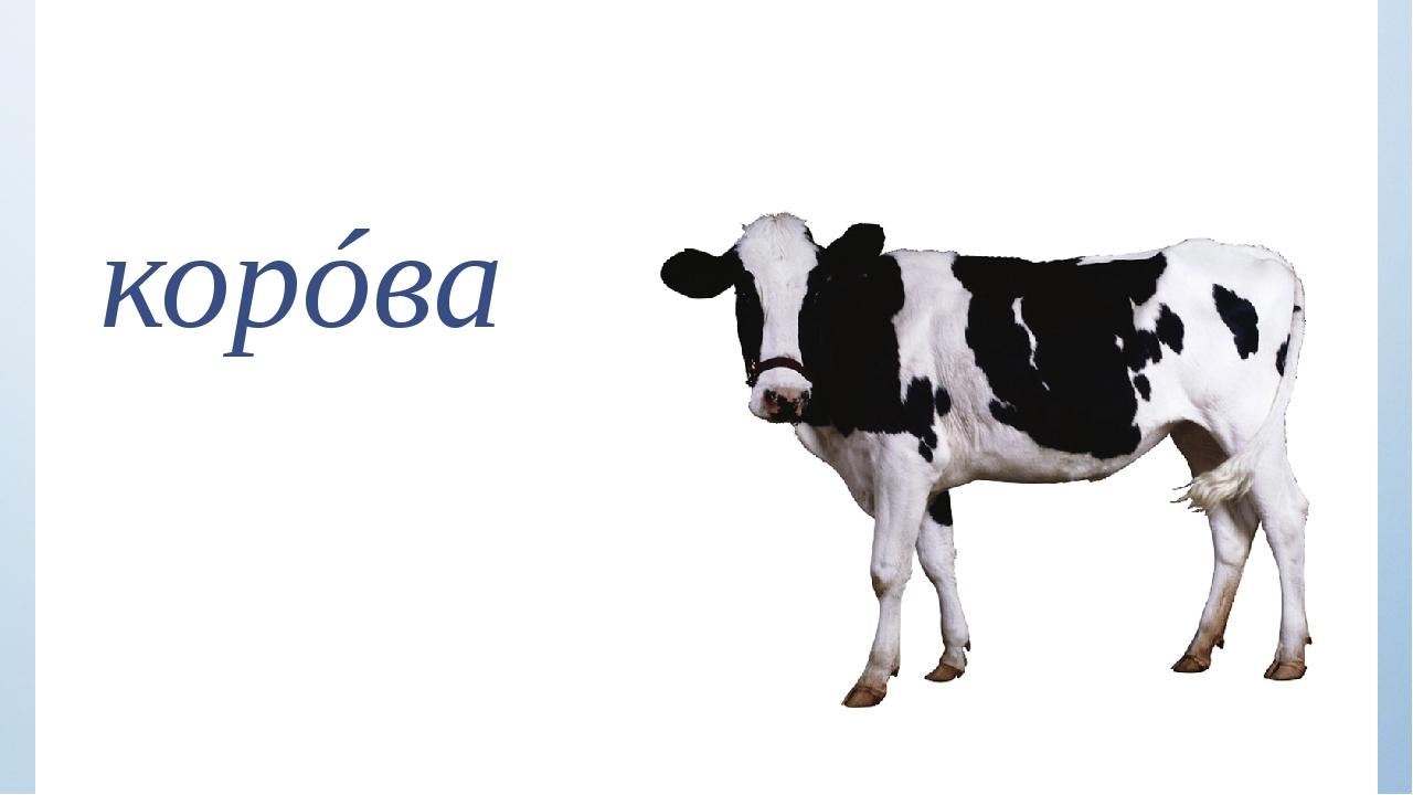 корóва