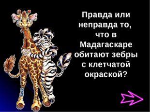 Правда или неправда то, что в Мадагаскаре обитают зебры с клетчатой окраской?