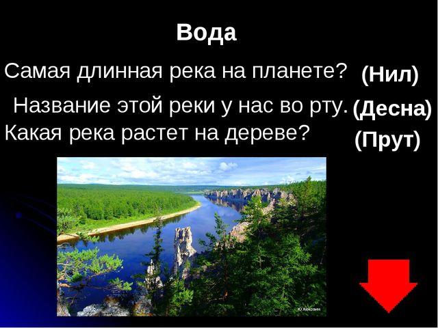 Вода Самая длинная река на планете? (Нил) Название этой реки у нас во рту. (Д...