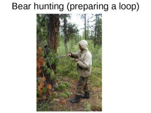 Bear hunting (preparing a loop)