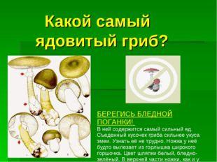 Какой самый ядовитый гриб? БЕРЕГИСЬ БЛЕДНОЙ ПОГАНКИ! В ней содержится самый