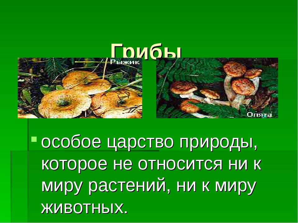 Грибы особое царство природы, которое не относится ни к миру растений, ни к...