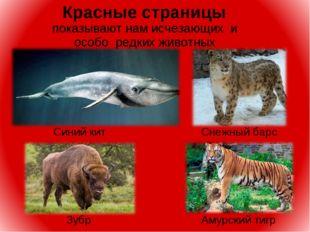Красные страницы показывают нам исчезающих и особо редких животных Снежный б