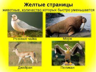 Желтые страницы животные, количество которых быстро уменьшается Розовая чайка