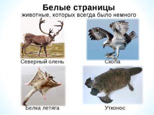 Белые страницы животные, которых всегда было немного Скопа Северный олень Бел