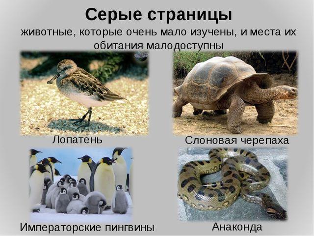 Серые страницы животные, которые очень мало изучены, и места их обитания мало...