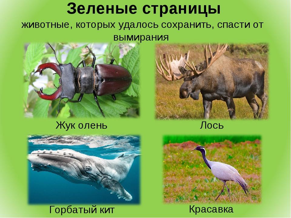 Зеленые страницы животные, которых удалось сохранить, спасти от вымирания Ло...