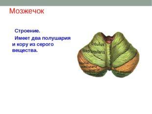 Мозжечок Строение. Имеет два полушария и кору из серого вещества.