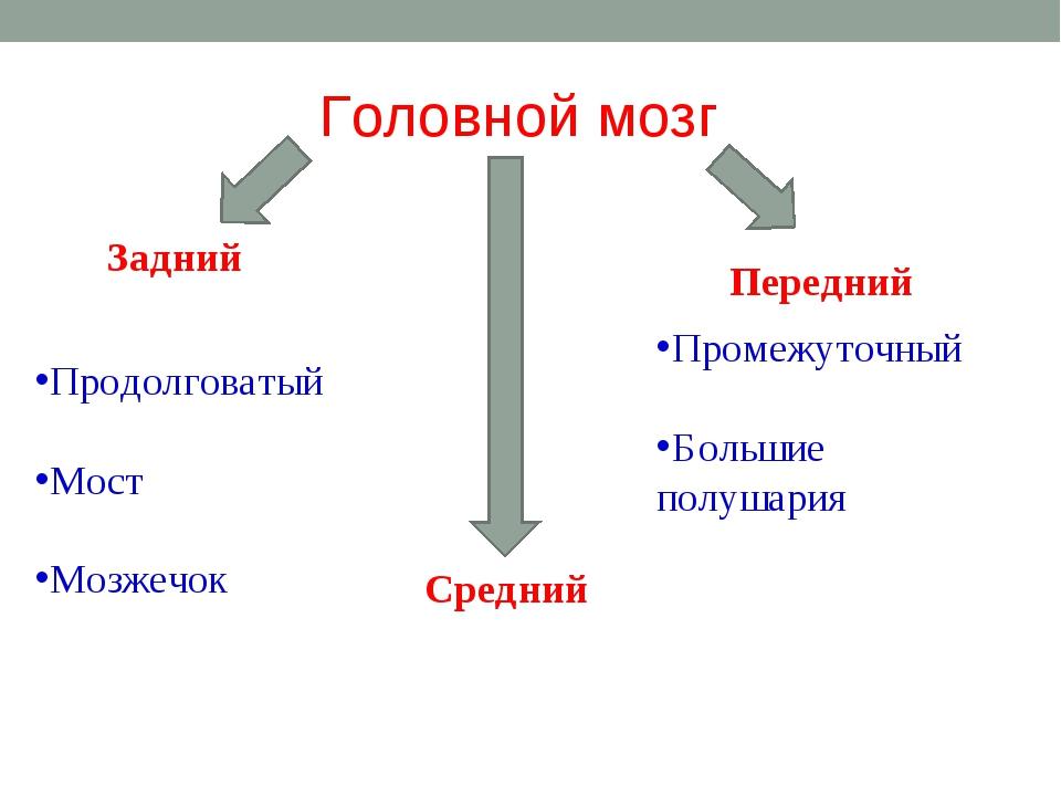 Головной мозг Задний Средний Передний Продолговатый Мост Мозжечок Промежуточн...