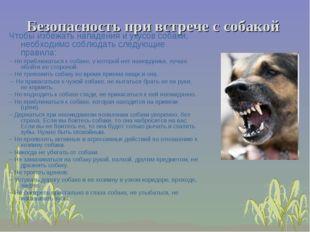 Безопасность при встрече с собакой Чтобы избежать нападения и укусов собаки,