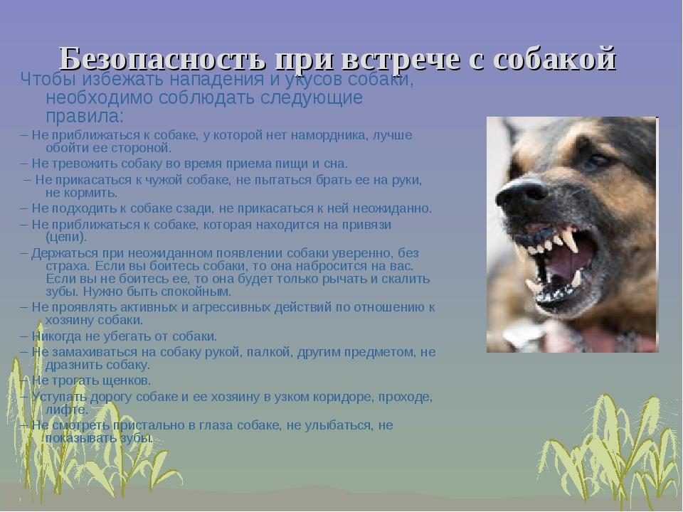 Безопасность при встрече с собакой Чтобы избежать нападения и укусов собаки,...