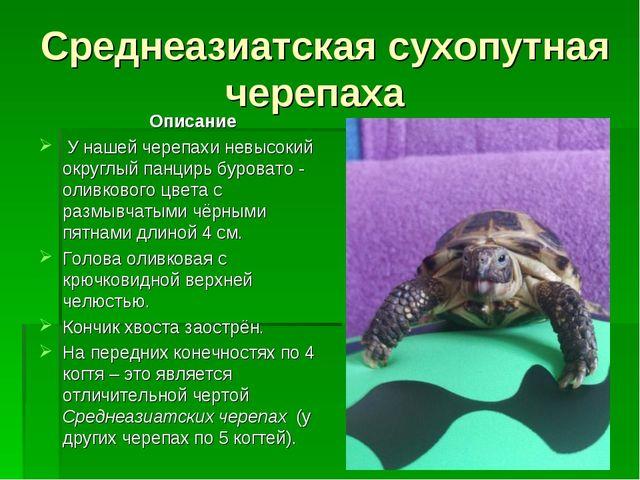 Среднеазиатская сухопутная черепаха Описание У нашей черепахи невысокий округ...