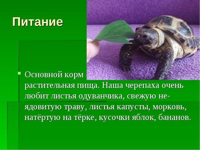 Питание Основной корм -для черепах – растительная пища. Наша черепаха очень л...