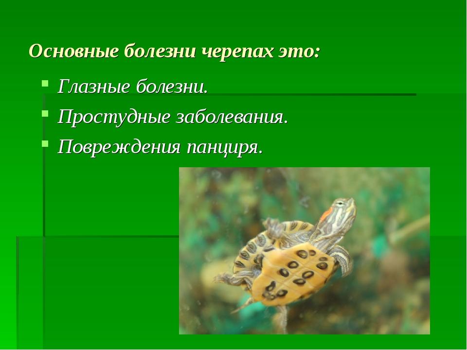 Основные болезни черепах это: Глазные болезни. Простудные заболевания. Повреж...